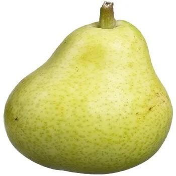 नाशपती, Pear fruits name in Marathi