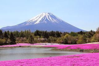 Fuji Matsuri