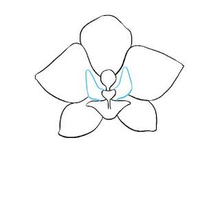تعليم الرسم للمبتدئين زهرة الأوركيد