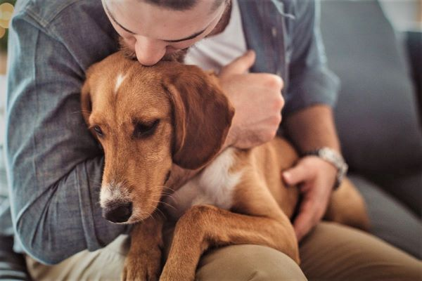 Is there control over dogs? Strategies for beginners