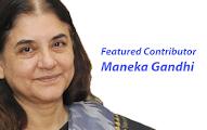 An  article by Maneka Gandhi