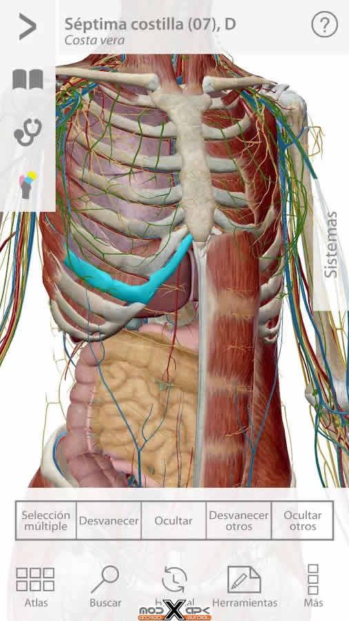 Libros en PDF de Kinesiología y Fisioterapia: Visible Body Human ...