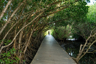 Info Wisata Hutan Mangrove Bali Kota Denpasar, Lokasi dan Tiket Masuk