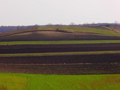 Ponidzie, rezerwat Przęślin, Nadnidziański Park Krajobrazowy,  miłek wiosenny Adonis vernalis