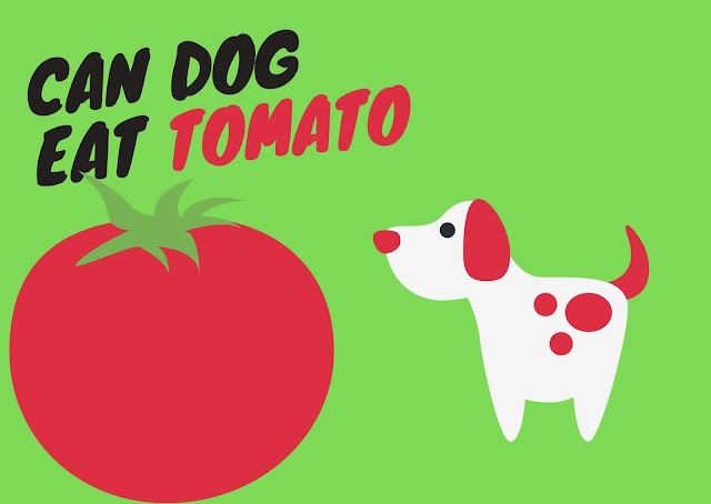can dog eat tomato ?