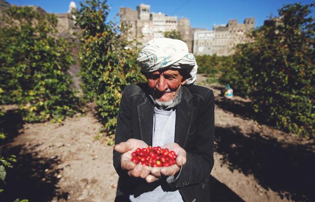البُنّ بدلاً من القات.. هل يعود اليمن موطناً للذهب الأسود؟