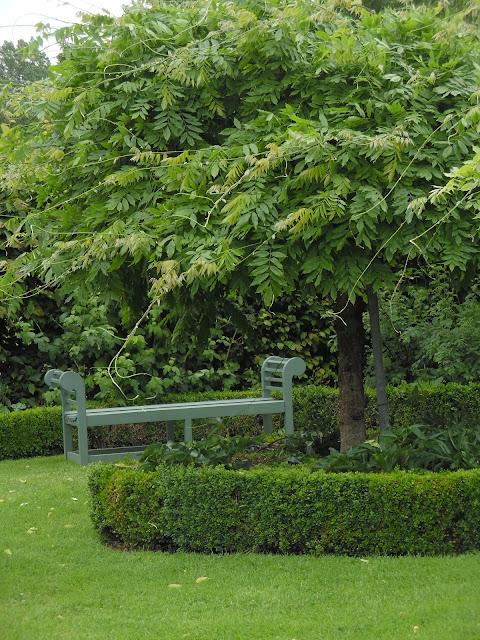 wisteria, ławka drewniana