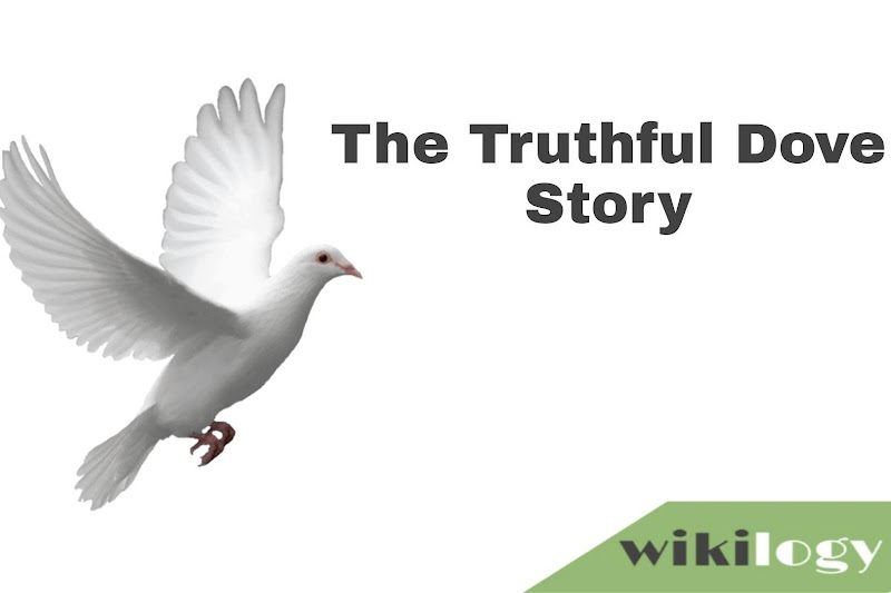 The Truthful dove story