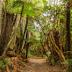 Ένα τρισεκατομμύριο δέντρα.....μπορούν να φρενάρουν την κλιματική αλλαγή...