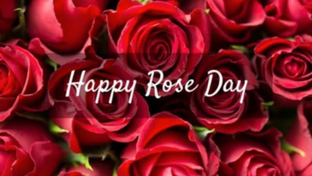 rose day funny images