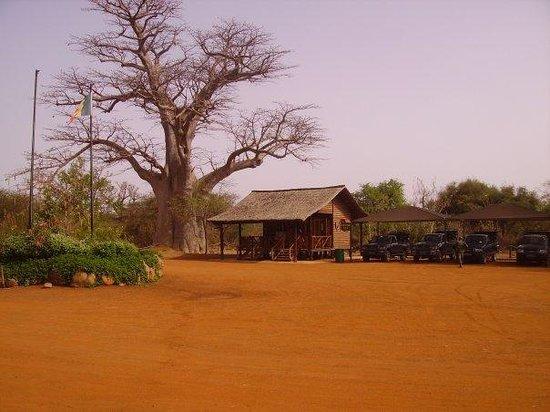 Tourisme, visite, réserve, parc, Mbour, protection, environnement, nature, savane, marigot,lagune, écosystème, LEUKSENEGAL, Dakar, Sénégal, Afrique