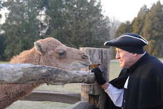 A man dressed as George Washington face to face with a camel over a wooden corral fence.
