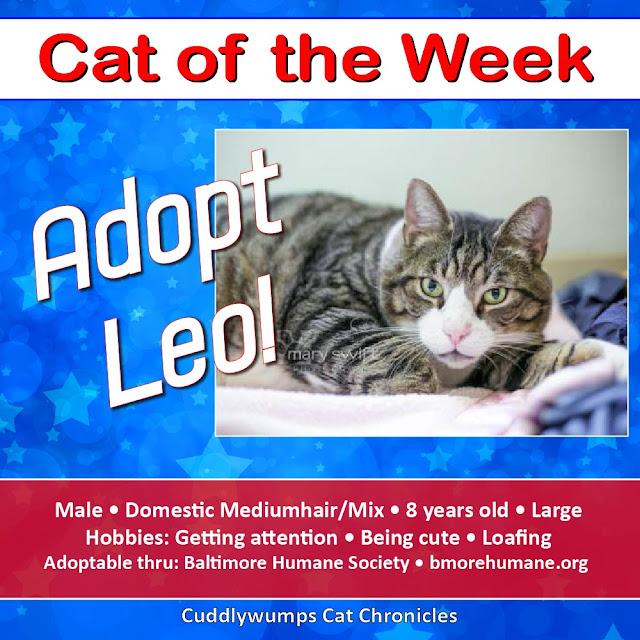 #adoptablecat #bmorehumane