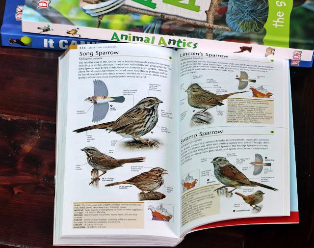 song sparrow pocket book of birds