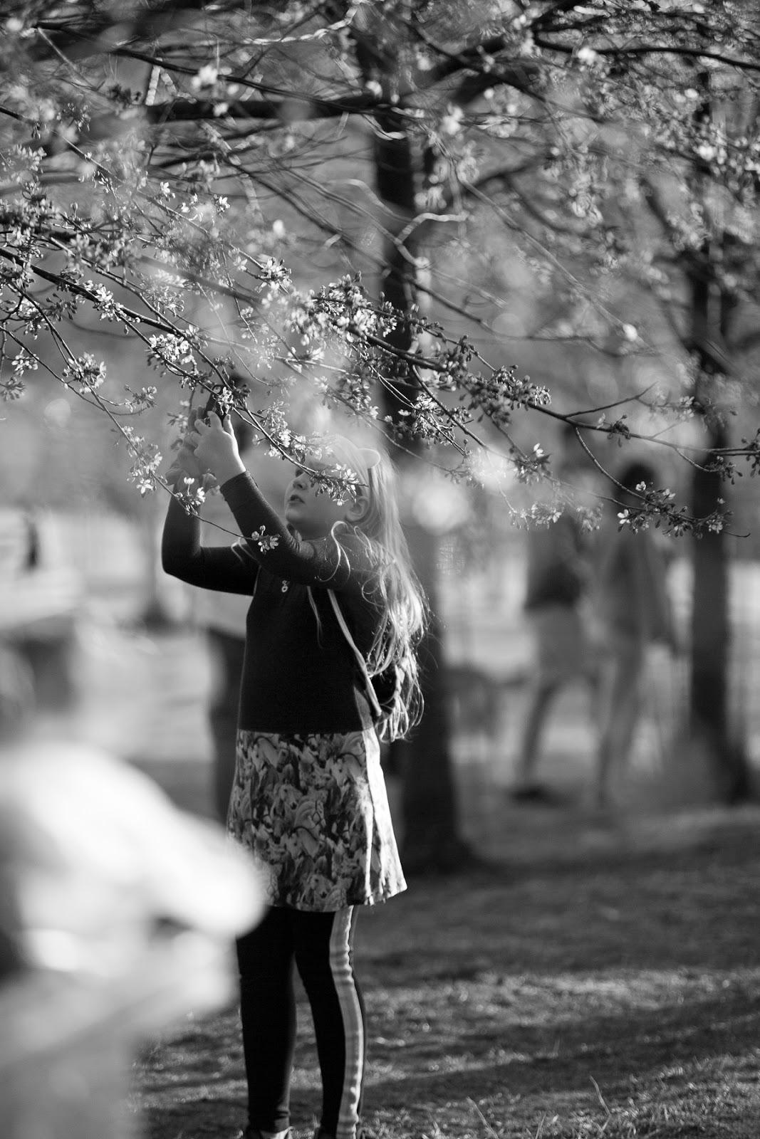 Helsinki, visithelsinki, finland, suomi, visitfinland, hanami, Roihuvuoren kirsikkapuisto, roihuvuori, kirsikkapuu, puito, nature, cherryblossom, kirskikankukka, kukkiva puu, kukat, valokuvaus, valokuvaaja, Frida Steiner, visualaddictfrida, visualaddict, blog, valokuvaaminen, kevät, luonto, nature, naturephotography, luontokuvaus, streetphotography, katukuvaus, blackandwhitephoto, bnw