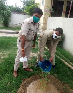 चौकी प्रभारी हरिश्चंद सिंह ने किया पौधरोपण | #NayaSaberaNetwork