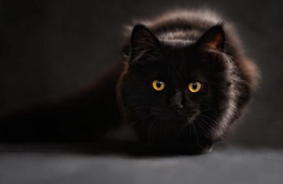 Kumpulan Gambar Kucing Lucu Imut Sangat Menggemaskan Kanalmu