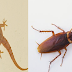How to Get Rid of Wall Gecko and Cockroaches From Your House