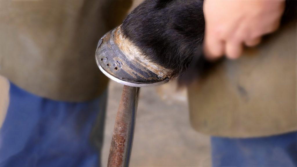 What Does a Farrier Do?