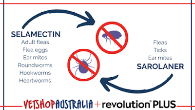 An infographic showing which of the ingredients in Revolution Plus work against which parasites