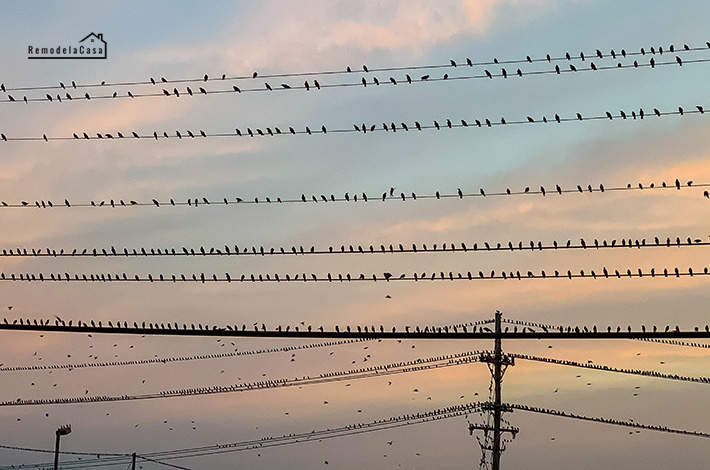 A flock of birds sitting on power lines