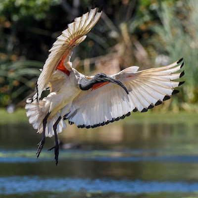 أجمل صور طيور رائعة