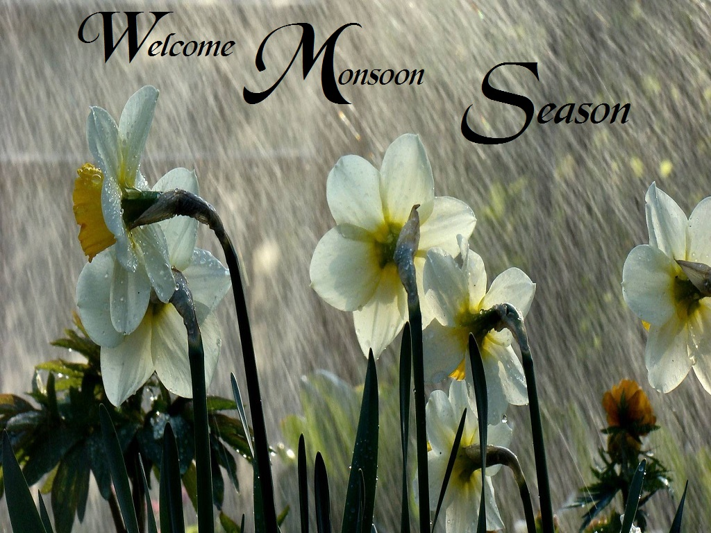 Rainy Season Wallpapers With Quotes Hd Welcome To Monsoon Season Rainfall Photos Festival Chaska