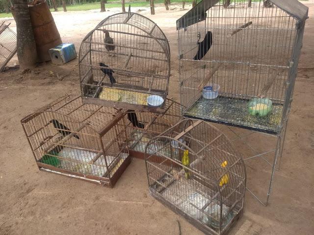 Polícia Ambiental resgata cinco aves silvestres mantidas em cativeiro e multa homem em R$ 2,5 mil