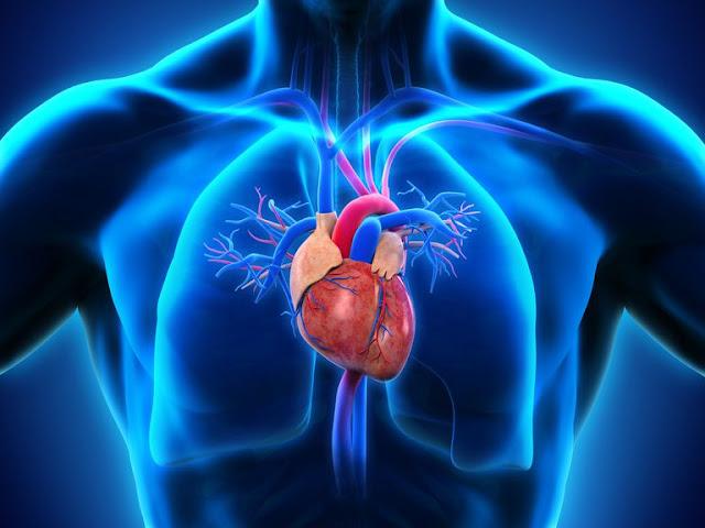 10 Fakta Tentang Jantung Manusia