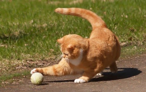 5 Best Cat Toys to Make Your Cats Smarter