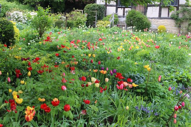 Colourful tulips in the rain