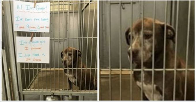 Lonely dog waits in shelter for over 7 years, begs someone to give her a 'second chance'