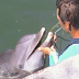 La tramposa ley antidelfinarios del PVEM. Empresarios podrán explotar delfines...hasta que mueran