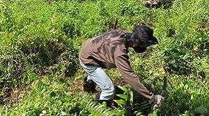 Sistem yang digunakan pada kegiatan rehabilitasi hutan dan lahan adalah penghijauan, reboisasi, dan pemeliharaan.