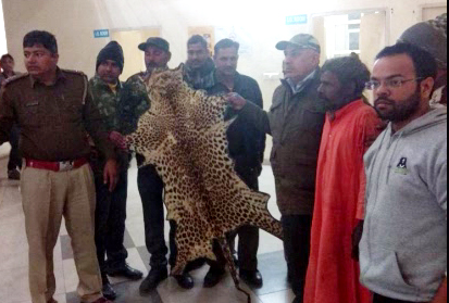 Sleeping priest arrested on leopard skins found in Fatehpur Bailouch Shiv temple, skins recovered
