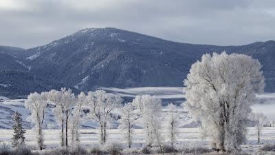 HD Wallpaper Snow, Winter, Forest, Mountain