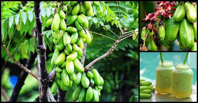Kamias Leaves And Fruits: How They Benefit Our Health