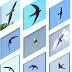 các loại chim yến