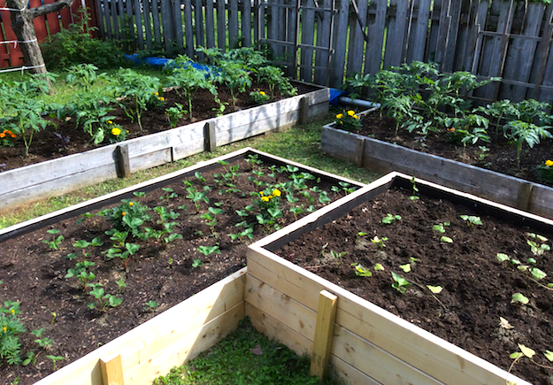 Our Raised Bed Vegetable Garden: Early Summer 2015 | The ...