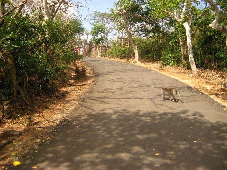 사원 가는 길의 원숭이