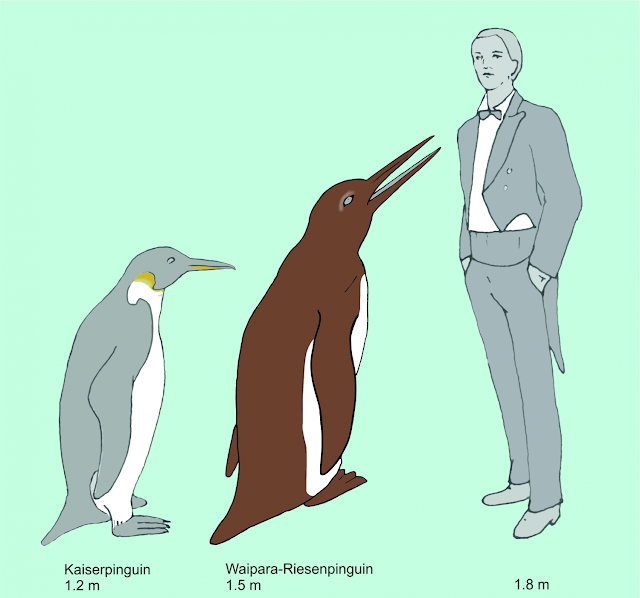 The oldest fossilized giant penguin found in New Zealand