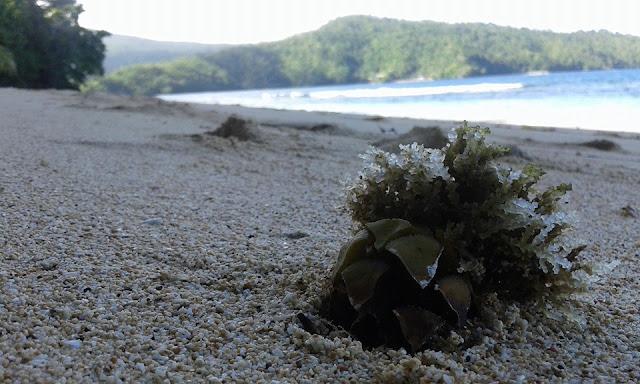 Surga Tersembunyi Itu Adalah Pantai Sapaeng Kuma Wisata Syarta Stevenly Takapaha