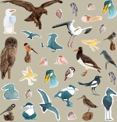 Kollage med en mängd teckningar av fåglar