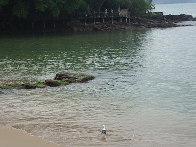 Praia do Canto - Balneário Camboriú - SC