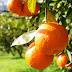 Ψήφισμα του Δημοτικού Συμβουλίου Ηγουμενίτσας για την ένταξη των εσπεριδοπαραγωγών σε πρόγραμμα αναπλήρωσης εισοδήματος