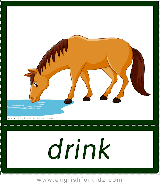 Verb drink (horse drinking water) - printable animal actions flashcards for English learners