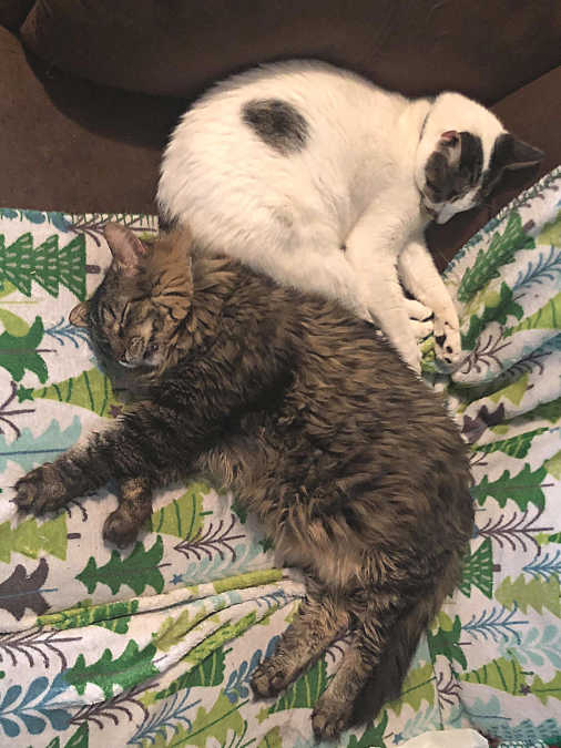 Rescue Stories Rescued Cats