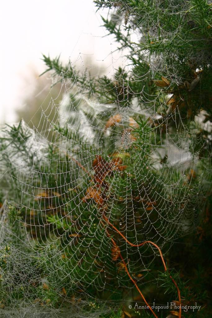 cobwebs and raindrops