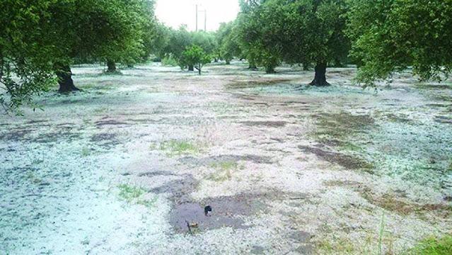 Ομοσπονδία Αγροτικών Συλλόγων Περιφέρειας Πελοποννήσου: Η χαλαζόπτωση στη Μεσσηνία κατέστρεψε καλλιέργειες 10.000 στρεμμάτων