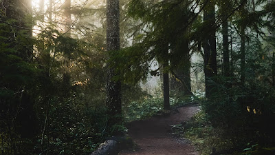 Path Forest Sunlight Free Nature Wallpaper